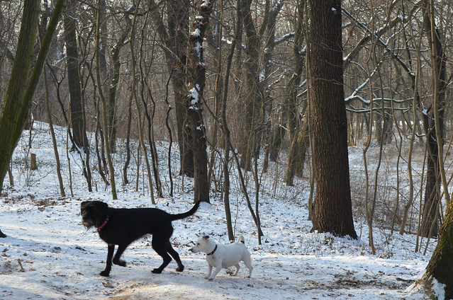 Snow day in Pankow Volkspark Schönholzer Heide other dogs