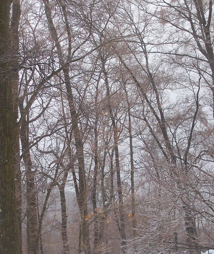 icy trees 2