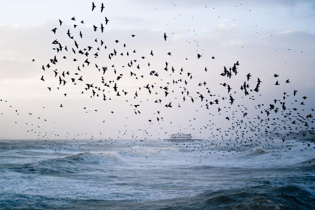 Stormy Seas and Starling Murmuration