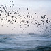 Stormy Seas and Starling Murmuration by lomokev