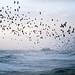 Stormy Seas and Starling Murmuration by lomokev