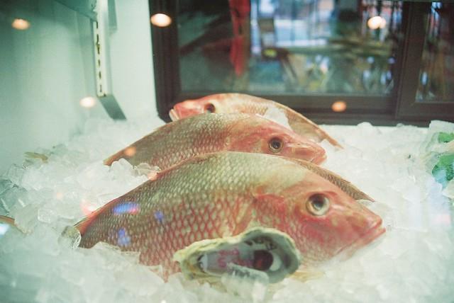 Sea beings