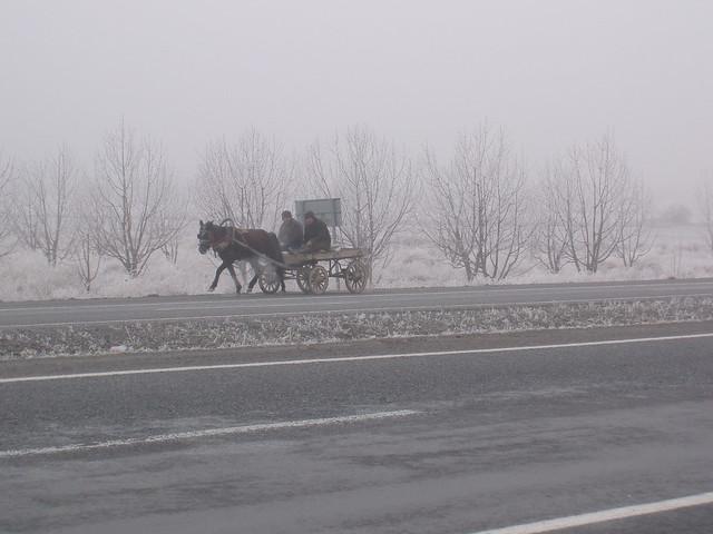 201401120179-horse-cart