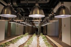 植物工廠。