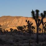 Sunset on rocks, Joshua Tree NP