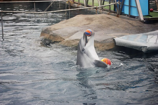(Moscow zoo Dolphinarium) Dolphin