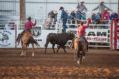 animal sports, rodeo, western riding, team penning, event, equestrian sport, sports, charreada,