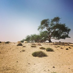 The Tree of Life, in the middle of nowhere