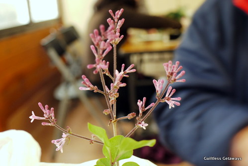 indoor-lilac.jpg
