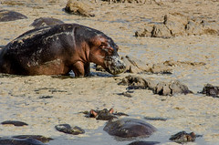 Tanzania-Serengeti-MbuziMaweSafariDrive-55