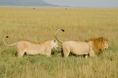 Tanzania-Serengeti-69