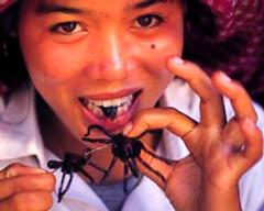 10.arañas-fritas1