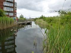 Greenwich Ecology Park 136