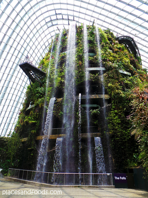 cloud forest the falls