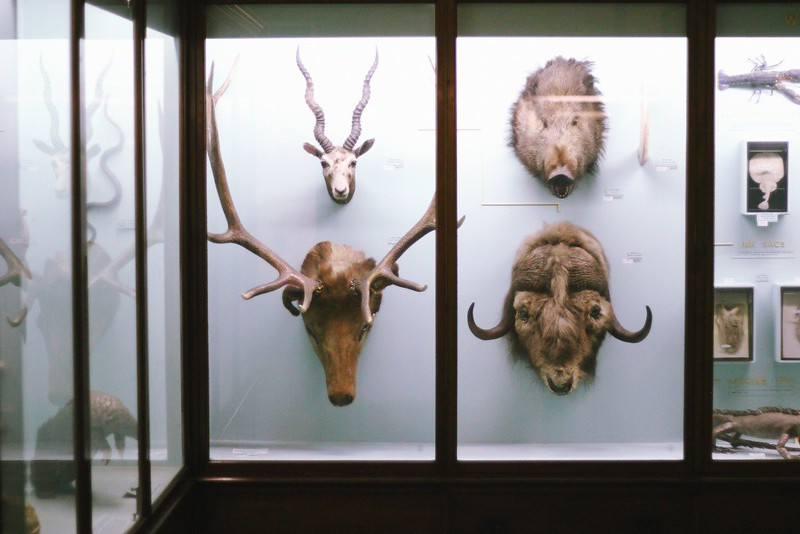 stag's and other heads