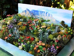 The Cape Floral Kingdom of the Western Cape