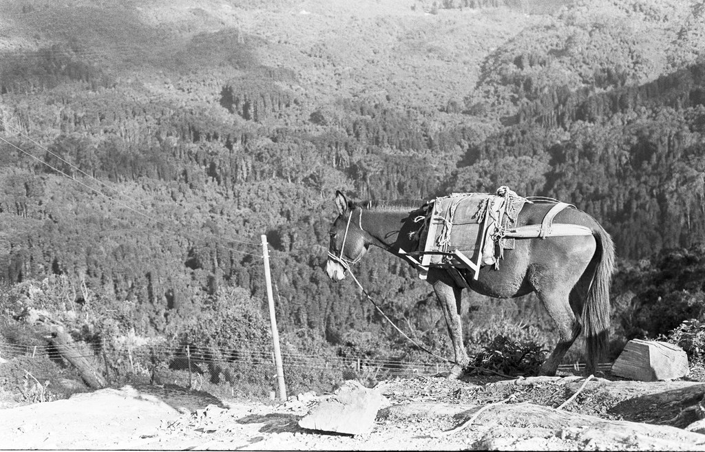 a burro on a mountain in colombia.jpg
