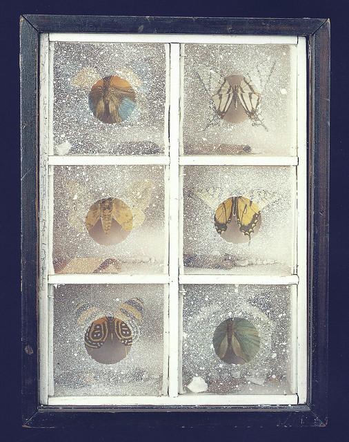 Joseph Cornell, Untitled Butterfly Habitat, c. 1940