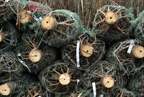 christmas trees-001