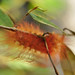 Caterpillar of a crinkled flannel moth by Junglenews