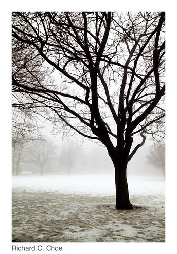Foggy Day 1 (2014, 1.11) by rchoephoto