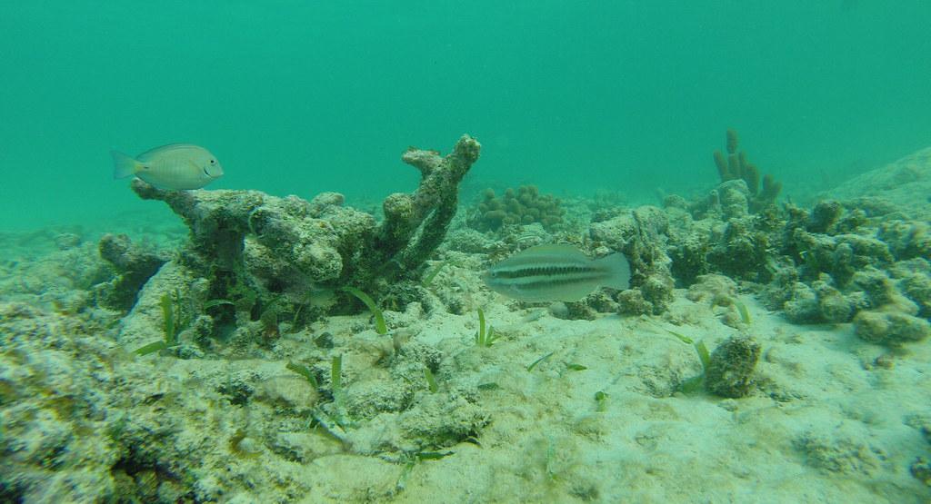 Yucatan trip photos from snorkling 11975928253_fd0a99de17_b