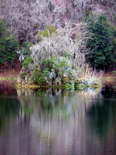 reflection water forest canon mirror image florida gainesville powershot sx280 paynesprairiepreservestatepark