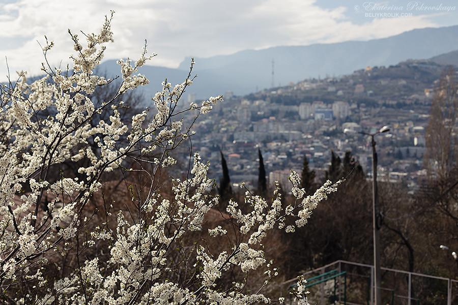 Yalta_spring_03