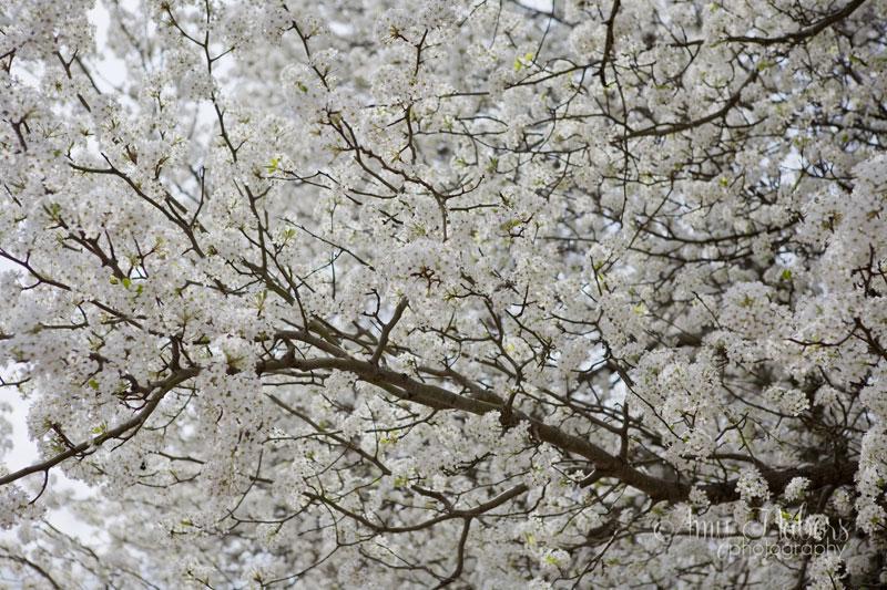 SpringTrees_Mar152014_0003