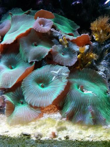 sjöfartsmuseet starfish