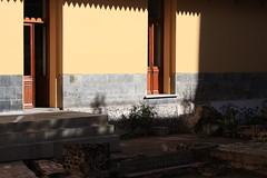 Sombras en el Jardín