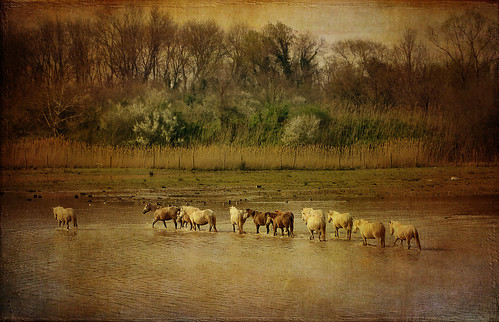 wild horses italy nature water landscape italia friuli isoladellacona