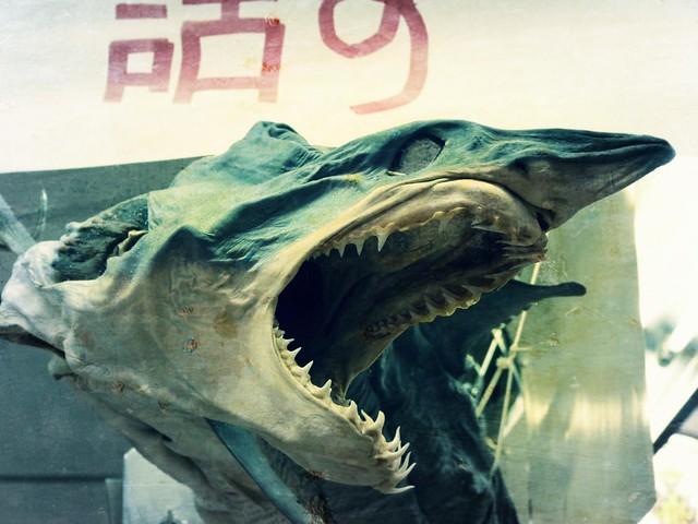 Tiburón en el Mercado Central de Valencia