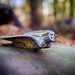 Cadillac Hood Ornament - Old Car City - White, GA by memories_by_mike