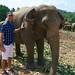 Pinnawala Elephant Orphanage by 6footplus