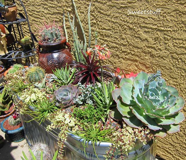 Succulent Water Trough