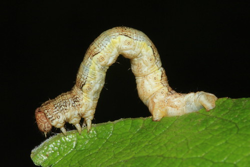 Caterpillar 28855