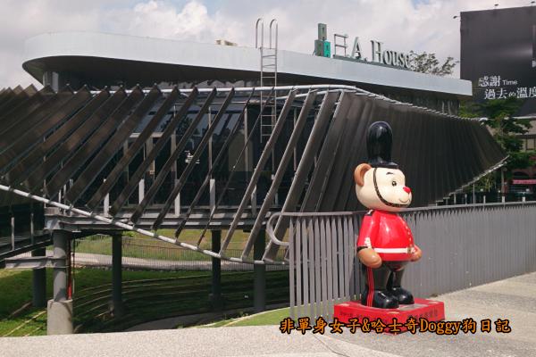 台中秋紅谷05