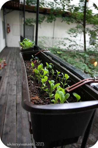 Garten 2013 2
