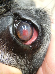 The World's Best Photos of cornealulcer - Flickr Hive Mind