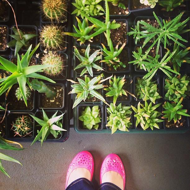 Succulent. #foundwhileadventuring
