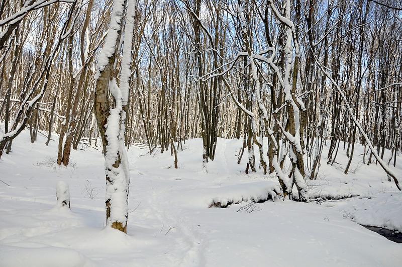 Зима (13 февраля 2011 года)