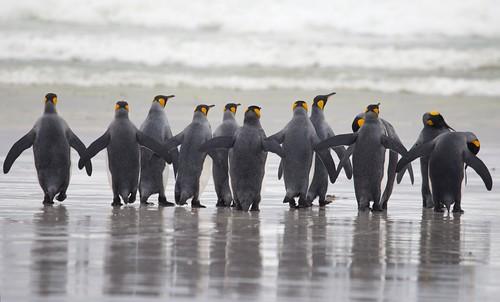 Falklands by richard.mcmanus.