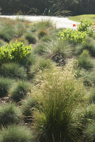 SFBG grasses