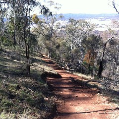 They have widened one of the 'goat' tracks we walk on. Means we can walk side by side :) #canberra #mtainslie #walking