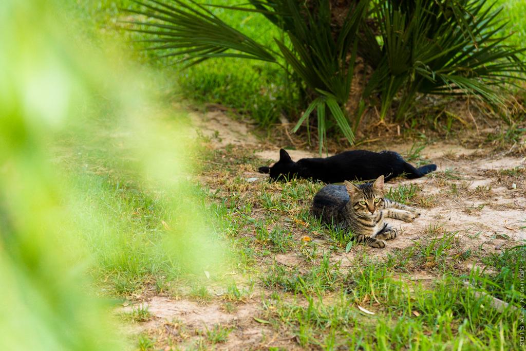 2013-Spain-Benidorm-CatsParadise-002