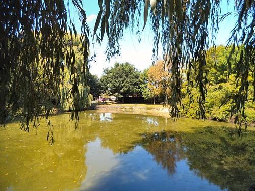 Purdis Heath fishing lake in summer