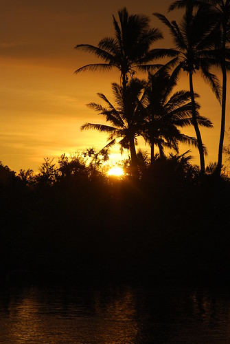 sunset sky sun plant tree fiji pacific outdoor dusk palm serene