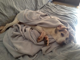 covered-up pup