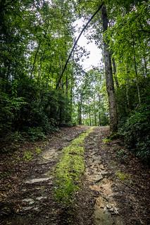Road to Friendship Methodist Cemetery
